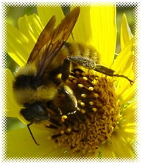 Bee_250